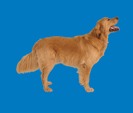 Why Joint Health Supplements for Dogs | Cosequin®