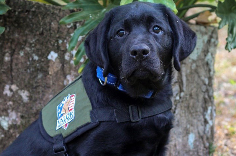 Training Tips by Valor Service Dog
